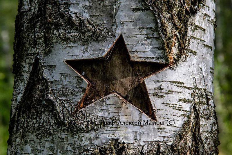 Звезда на березе