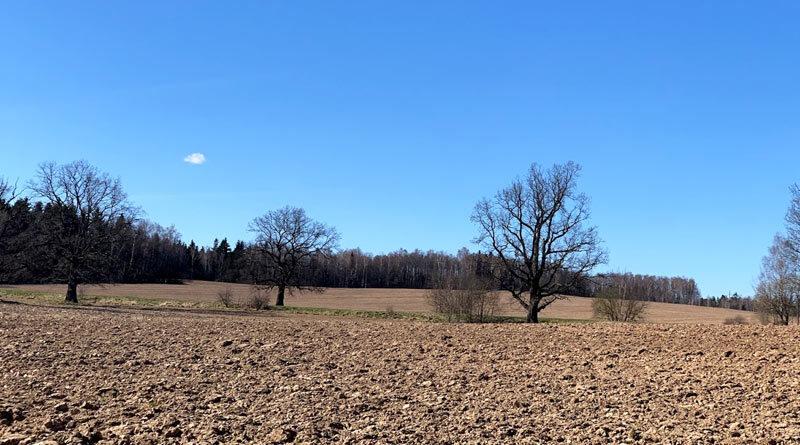 Белорусское поле